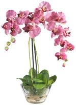 Nearly Natural Double Phalaenopsis with Glass Vase Silk Flower Arrangement