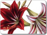 Jason Amaryllis Placemats - Set of 4 (Large)