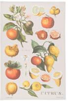 Now Designs Citrus Botanical Cotton Dishtowel