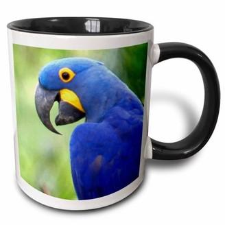 3drose 3dRose Brazil, Pantanal, endangered Hyacinth Macaw, birds - SA04 KWI0095 - Kymri Wilt, Two Tone Black Mug, 11oz