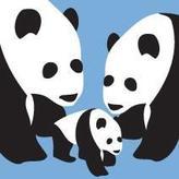 Avalisa 3 Pandas Stretched Print