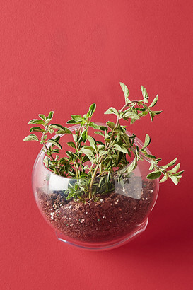 Anthropologie Urbz Crystal Clear Window Planter By in White Size S