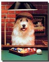 Cute Dog Playing Pool Funny Kids Wildlife Animal Wall Decor Art Print Poster (16x20)