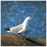 Ddcg Painted Coastal Seagull 36x36 Canvas Wall Art
