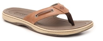 Sperry Top Sider Havasu Sandal