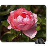 Geevo Pink flower Mouse Pad, Mousepad (Flowers Mouse Pad)