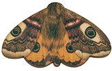 Tatty Devine Women's Moth Brooch