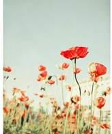 Lulu & Georgia Bree Madden Red Poppy Flowers Print