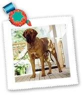 Fila 3dRose LLC qs_706_1 Dogs Brazilian Brazilian Quilt Squares