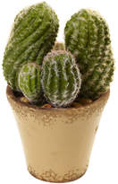 Asstd National Brand Nearly Natural Cactus Garden With Ceramic Planter