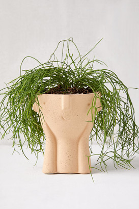 Urban Outfitters Hector Face Planter