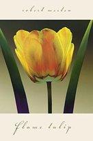 Rob-ert 1art1 Posters: Robert Mertens Poster Art Print - Flame Tulip I (36 x 24 inches)