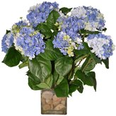The French Bee Hydrangea Bush W/ Rocks In A Glass Vase