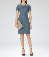 Reiss Floran Mesh And Lace Dress