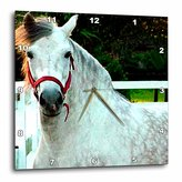 3dRose LLC Andalusian Gelding 10 by 10-Inch Wall Clock