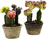 Asstd National Brand Colorful Cactus Gardens Set Of 2