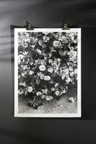 Urban Outfitters Debbie Carlos Black And White Flowers Art Print