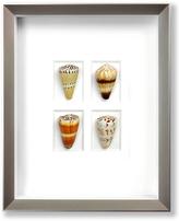 Cone Shells (Shadow Box Frame)