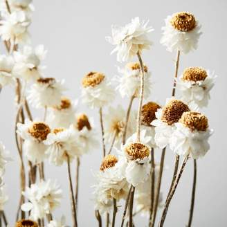 west elm Dried White Winged Everlasting Flowers Branch