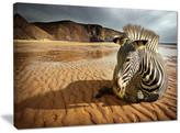 "Design Art Usa ""Beach Zebra"" Animal Photography Canvas Print, 40""x30"""