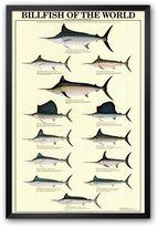 "Art.com Billfish of the World"" Framed Art Print"