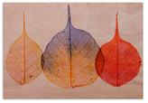 Bodhi Colorful Leaf