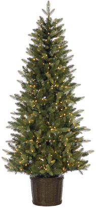 Sterling Tree Company 6Ft. Potted Natural Cut Ontario Pine W/ 500 Warm White Led Micro Lights