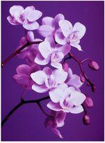 "Graham & Brown ""Purple Orchid"" Canvas Art"