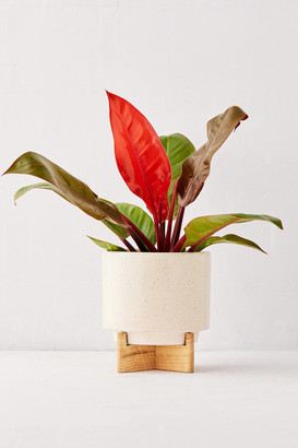 """Urban Outfitters Cecily 6"""" Planter + Stand"""