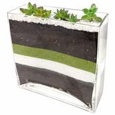 Succulent Slice Vase