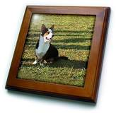Corgi 3dRose LLC ft_963_1 Dogs Welsh Cardigan Welsh Cardigan Framed Tiles