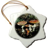 3dRose LLC orn_82651_1 Danita Delimont - Fungi - Fungi, Agaric Mushroom, Oberaegeri, Switzerland - EU29 RNU0023 - Rolf Nussbaumer - Ornaments