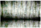 "Parvez Taj Wispy Trees Reflect Wall Art - 36"" x 24\"""