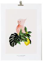 MAISON BALUCHON Parrot A3 Poster