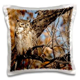Willow Tree 3drose 3dRose Great Horned Owl bird, willow tree, New Mexico, USA - US32 LDI0035 - Larry Ditto, Pillow Case, 16 by 16-inch