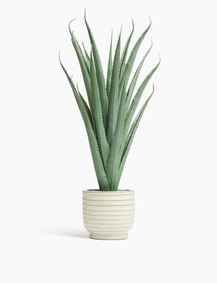 Marks and Spencer Glazed Pot with Large Aloe