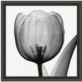Pottery Barn Tulip Framed Print by Don Dudenbostel