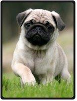 AOIKH Custom Throw Fleece Blanket Pug Dog 58 Inch x 80 Inch (Large)