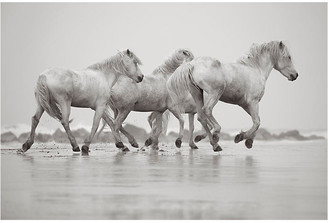 "Drew Doggett Photography Drew Doggett - Prance 24""L X 33""W"