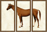 One Kings Lane Horse Triptych I