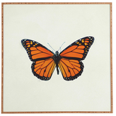DENY Designs The Queen Butterfly by Chelsea Victoria (Framed)