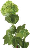 OKA Faux Viburnum Flower Stem, Small