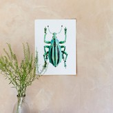 Graham and Green Insect Print - Eupholus Cuvieri