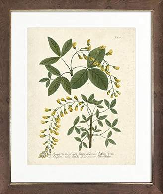 Botanicals IV Framed Art Picture/Print In A Brown Frame - Glass Front - Outside Measurements 56 x 45.5cm