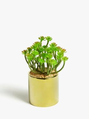 John Lewis & Partners Artificial Succulent