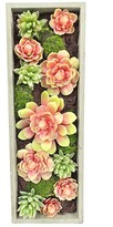 Gold Eagle Mixed Succulents Rectangle Wall Planter