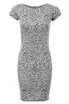 Select Fashion Fashion Womens Grey Animal Jaquard Mini Dress - size 6