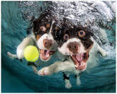 "Empire Art Direct ""English Springer Spaniels "" Dog Wall Art Unframed Free Floating Tempe"