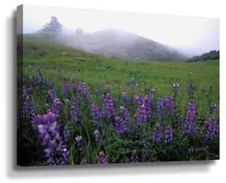 ArtWall Kathy Yates Figueroa Mountain With Fog Wall Art