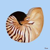 Nautilus Shell on Blue Outdoor Print